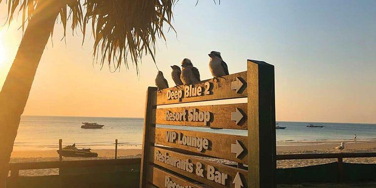 Tangalooma-birds