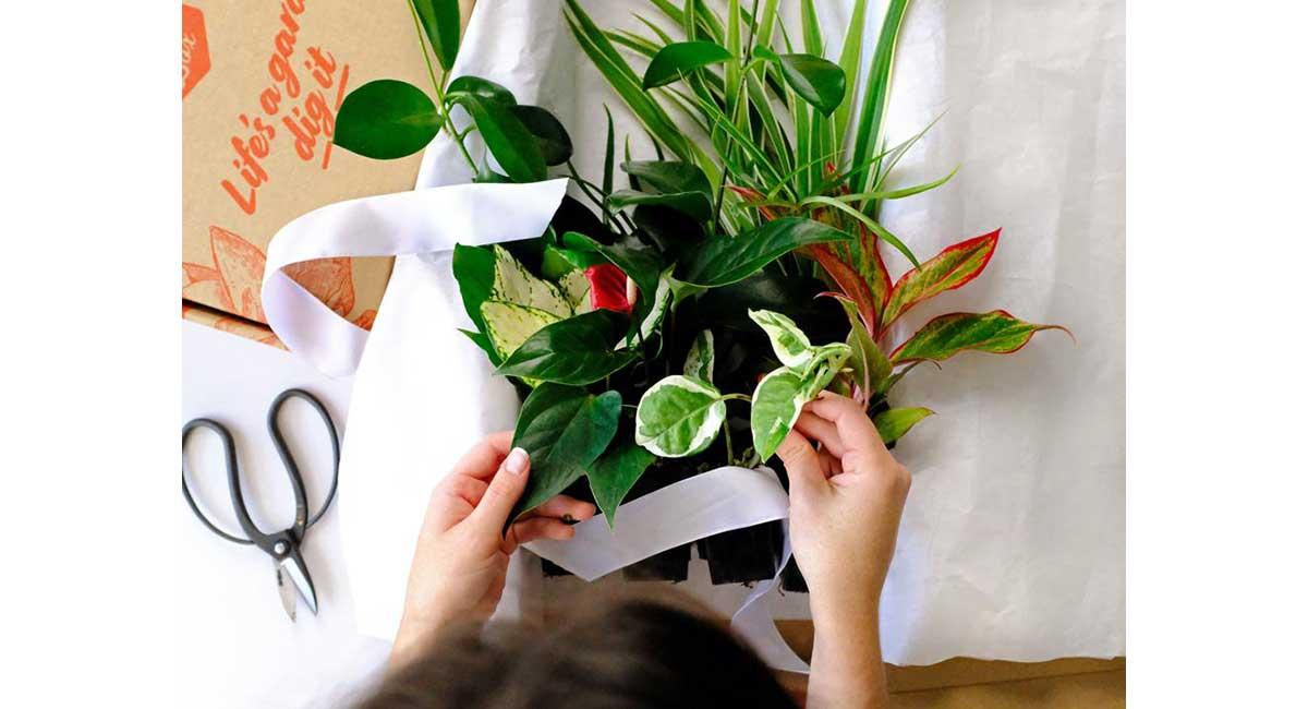 gift box of indoor plants