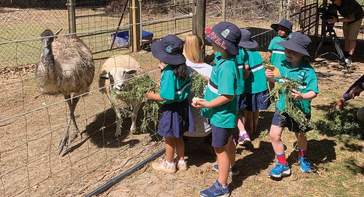 students feeding the farm's emu