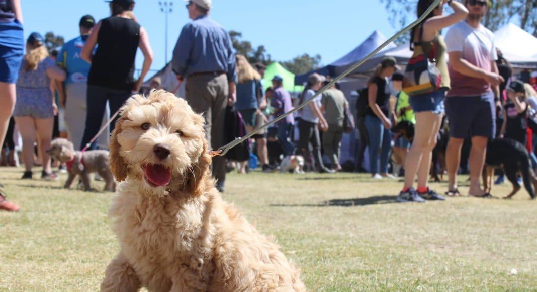 Paws at the Park – Gold Coast Dog Markets