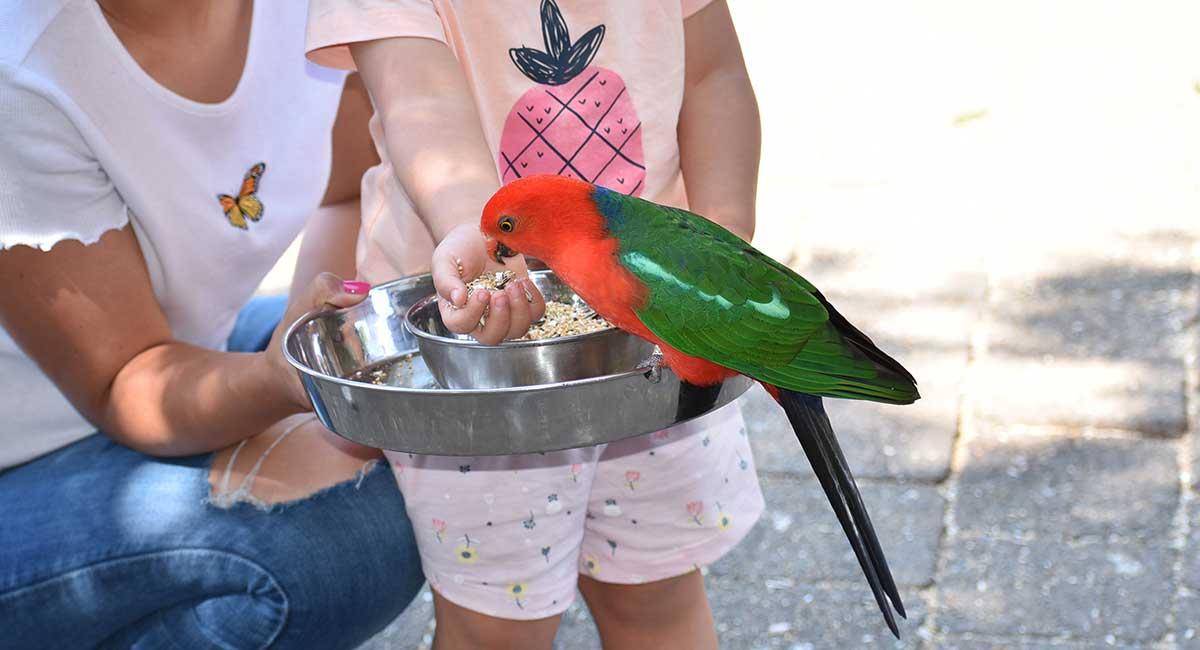 Bird feeding kids activities in Queensland