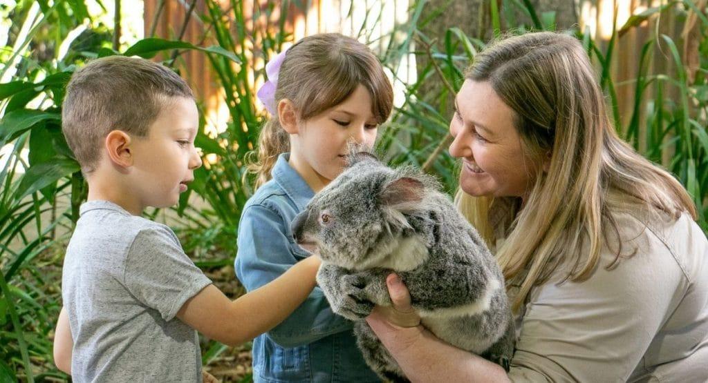 Currumbin Wildlife Sanctuary - Koala Photo