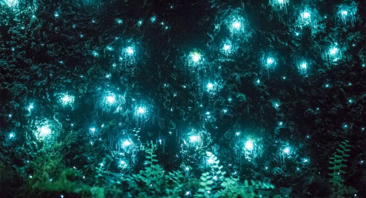 Glow Worms at Mount Tamborine