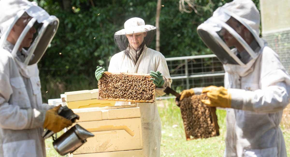 Flinders-Farm-school-bee-hives